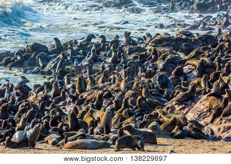 Reserve fur seals in Namibia, Cape Cross.