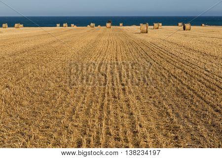 Rural landscape: hay rolls on mown wheat field on blue sky background - near sea coast Larnaca Cyprus.