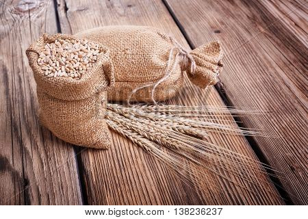 harvest on the farm, delicious food, ears of wheat, burlap sack of grain, healthy food, a table of old wood, close-up corn, wheat grain spillage