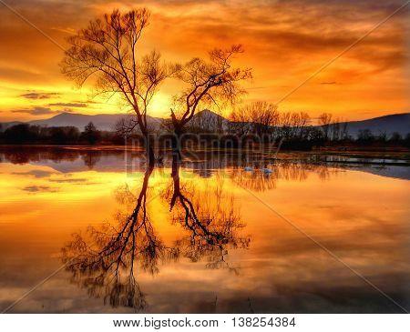 Deux arbres en hiver au bord de l'eau