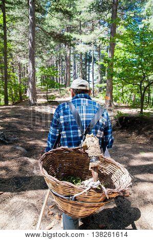 Walking Mushroom Finder