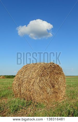 Bale Of Hay In Field