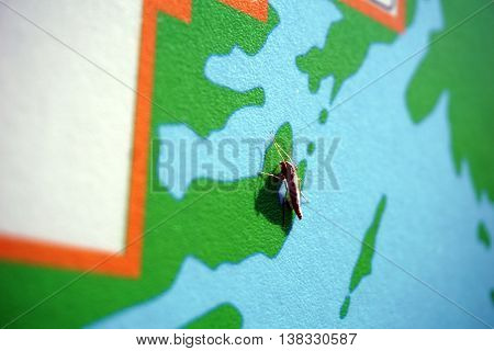 PLAINFIELD, ILLINOIS / UNITED STATES - MAY 4, 2015: A non-biting midge (Chironomus sp.) rests on a map at the Lake Renwick Heron Rookery Nature Preserve in Plainfield.
