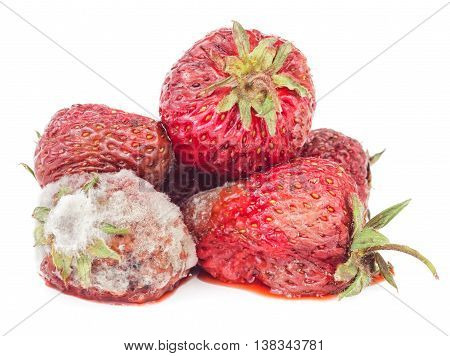 Rotten strawberry isolated on white background. Moldy fruits