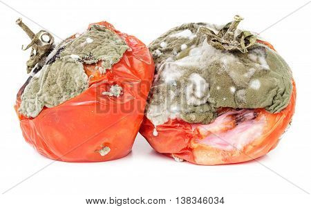 Rotten tomatoes isolated on white background. Moldy vegetable.