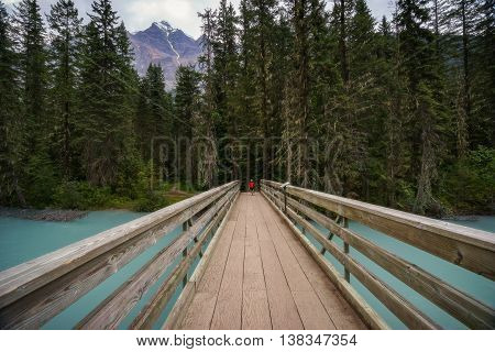 Young boy biking the Berg Lake Trail to Kinney Lake near Mount Robson.
