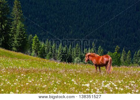 Brown horse on the flower mountain lawn