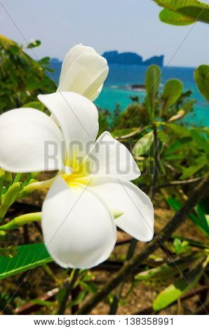 Tropical Verdure Flora and Sea