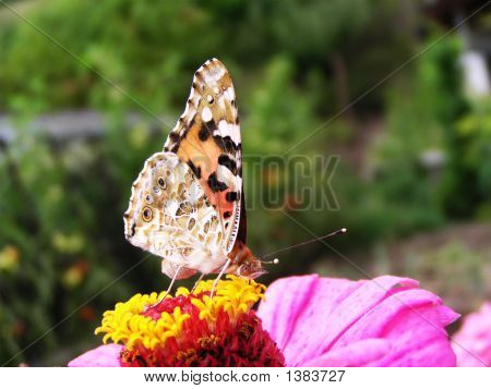 Beautiful colorful butterfly on beautiful colorful flower poster
