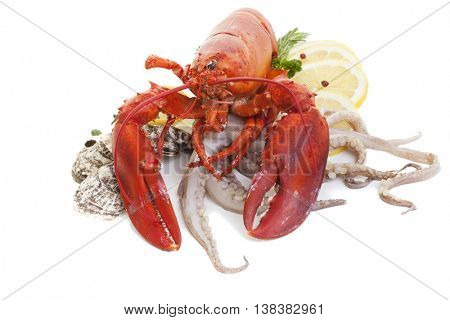 Lobster with oysters and squid on a white background.