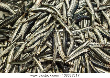 A display of freshly caught sardines at a fish market in a Barcelona boqueria forms a natural background.