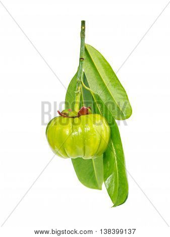 Garcinia cambogia fresh fruit, isolated on white. Garcinia atroviridis is a spice plants and high vitamin C and hydroxy citric acids (HCA) for diet and good health.