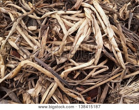 close up dry Eichhornia crassipes plants for agriculture