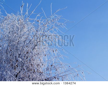 Frosted Spindly Tree Branches
