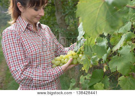 Farmer In The Vineyard