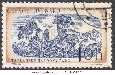 MOSCOW RUSSIA - JANUARY 2016: a post stamp printed in CZECHOSLOVAKIA shows a plant Gentiana clusii the series