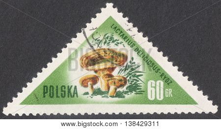 MOSCOW RUSSIA - CIRCA JANUARY 2016: a post stamp printed in POLAND shows a mushroom Lactarius deliciosus the series