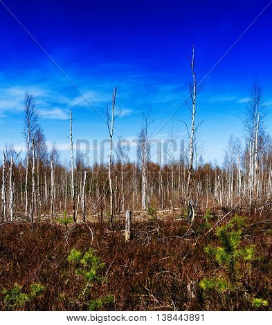 Square Vivid Autumn Midland Wild Wood Forest Landscape Backgroun