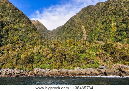 Lush Forest In The Milford Sound, New Zealand