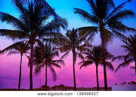 Miami Beach South Beach sunset palm trees in Ocean Drive Florida