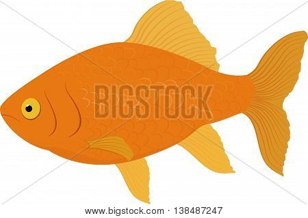 Carassius auratus gold fish . Fish isolated on a white background. Vector illustration.