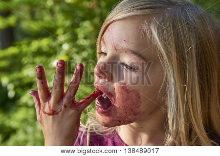 Child blond little girl picking fresh berries on blueberry field in forest. Child pick blue berry in the woods. Little girl playing outdoors. Hands red from crushed blueberries. Summer family fun.