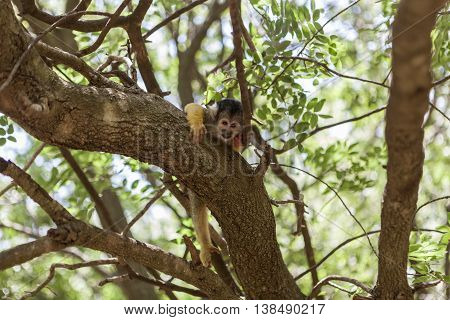 The Monkey In Tree