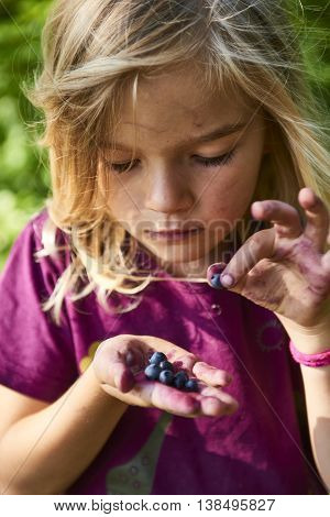 Child blond little girl picking fresh berries on blueberry field in forest. Child pick blue berry in the woods. Little girl playing outdoors. Summer family fun.