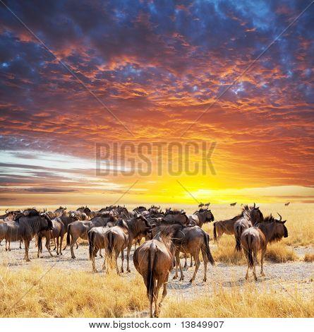 antelope gnu crowd poster