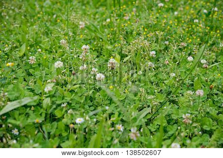 Vibrant summer meadow with flowers on a sunny day in Germany