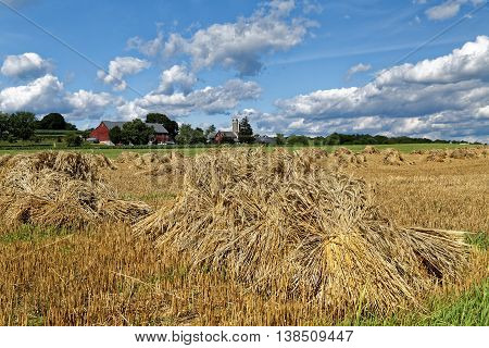 A traditional Amish wheat harvest scene. The grain is cut tied into bundles and set up in shocks to dry. Lancaster County Pennsylvania USA.