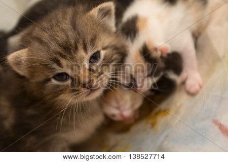 several small kittens seek help with loving gaze - close-up