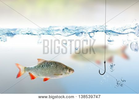 Fishing Hook Under Water And Rudd Fish