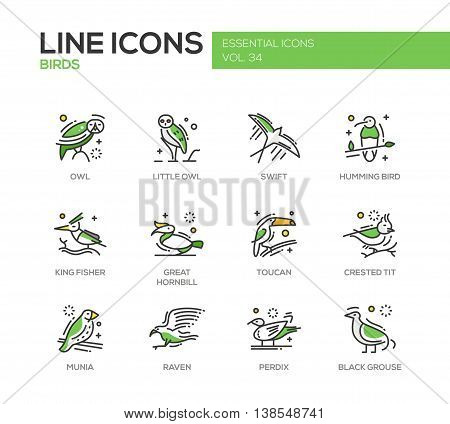 Birds - set of modern vector line design icons and pictograms of animals. Owl, swift, humming bird, king fisher, great hornbill, toucan, crested tit, munia, raven, perdix, black grouse