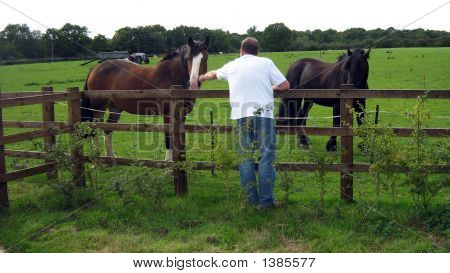 Man-Elderly Showing Tenderness/Kindness To Horses