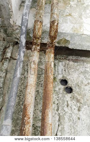 Fungal mold pipe unhygienic parasitic wall damage