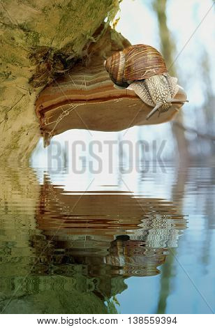 Natural environment with tree trunk and snail reflected in water. Polypore on a tree with snail and natural lake