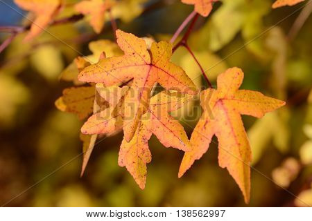 Cloes up from colorful autum foliage in nature