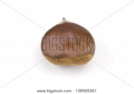 a Chestnut isolated on a white background