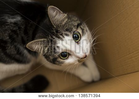 domestic cat sitting in the cardboard box