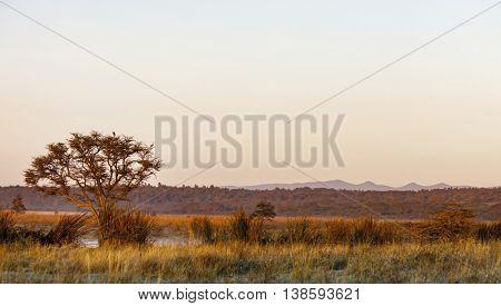 panoramic landscape of Nairobi National Park and Ngong Hills in Kenya