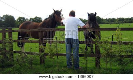 Man Showing Tenderness/Kindess To Horses