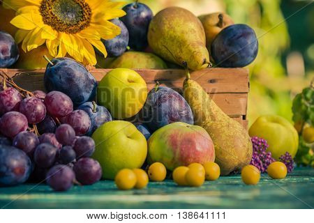 Garden Late Summer Seasonal Fruits Basket Light Setting Sun