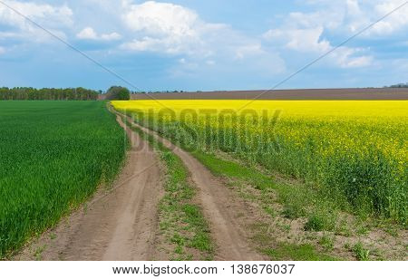 Spring landscape with farm fields in central Ukraine