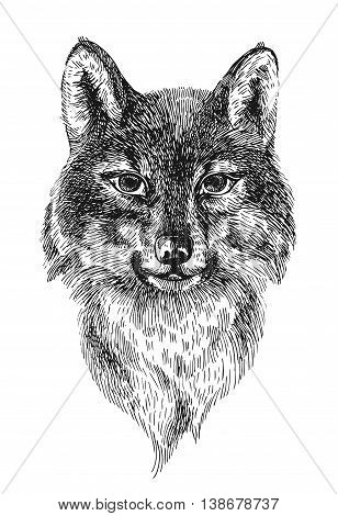 Beautiful hand drawn vector illustration portrait of wolf. Engraving style.