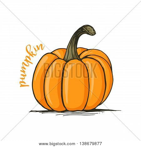 Appetizing sketch style pumpkin vector illustration isolated on white background. Traditional Halloween pumpkin