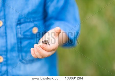 Close Up Of Child Hand With Small Frog