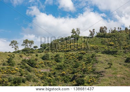 Sicilian inland with mountains blooming yellow bushes and trees