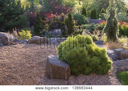 A Horsford dwarf white pine is the centerpiece of this backyard perennial garden with pebbles.