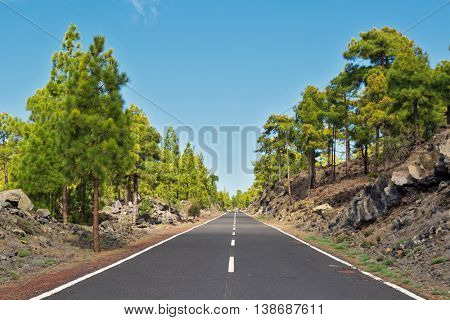 Landscape with road in pine grove, mountains, sea in Teide National Park, Tenerife, Canary Islands, Spain
